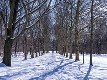Gasse im Winter lizenzfreies stockbild