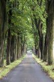 Gasse mit alten Bäumen Lizenzfreies Stockfoto
