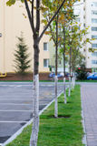 Gasse mit Bäumen Stockfotos