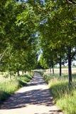 Gasse mit Bäumen Lizenzfreie Stockbilder