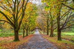 Gasse mit Bäumen im Herbst in Nationalpark Snowdonia in Wales Lizenzfreies Stockbild