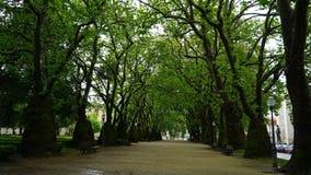 Gasse mit Bäumen in Porto, Portugal Stockbild