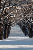 Gasse mit Baumreihen in einer Winterlandschaft Lizenzfreies Stockfoto