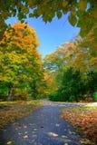 Gasse mit fallenden Blättern im Fallpark Stockbild