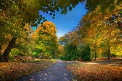 Gasse mit fallenden Blättern im Fallpark Stockbilder