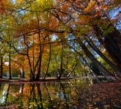 Gasse mit fallenden Blättern im Fallpark Lizenzfreies Stockbild