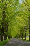 Gasse mit gepflasterter Straße stockfotos