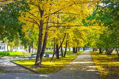Gasse mit Herbstbäumen im Park des Nowosibirsk-Staates ACA Lizenzfreie Stockfotografie