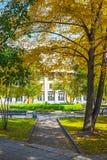 Gasse mit Herbstbäumen im Park des Nowosibirsk-Staates ACA Lizenzfreie Stockfotos