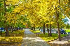 Gasse mit Herbstbäumen im Park des Nowosibirsk-Staates ACA Stockfotos