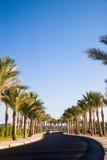 Gasse mit Palmebäumen Lizenzfreie Stockfotos