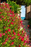 Gasse in Noirmoutier mit Meer lizenzfreie stockbilder