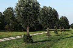 Gasse unter Bäumen stockfotos