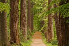 Gasse unter den Bäumen lizenzfreie stockfotos