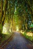 Gasse von Bäumen gesäumt lizenzfreie stockbilder
