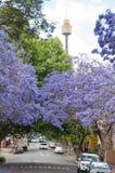 Gasse von blühenden Jacarandabäumen mit Sydney Westfield Tower an stockfotos