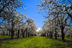Gasse von Frühlingswiederbelebung Stockbild