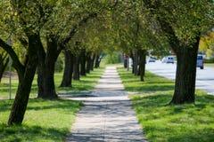 Gasse von grünen Bäumen in der Stadt, in der Straße und in den Autos stockfotografie