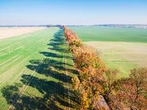 Gasse von Herbstbäumen unter grünen Feldern lizenzfreie stockbilder