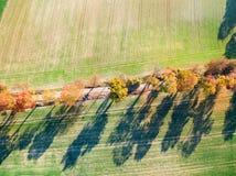 Gasse von Herbstbäumen unter grünen Feldern in der Landschaft stockfotografie