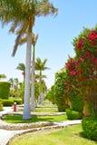 Gasse von Palmen und Blütenpflanzen in einem Hotel in Ägypten stockfotografie