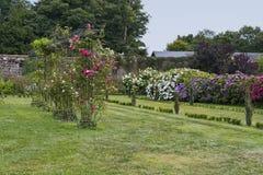 Gasse von Rosen auf einem Gitter im botanischen Park von oberer Bretagne stockbild