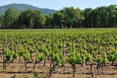 Gassin Frankrike - april 16 2016: Bertaud Belieu gods Arkivfoton