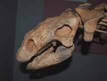 Gastonia-Dinosaurier-Schädel stockbilder