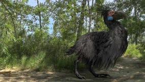 Gastornis (恐怖鸟)在森林动画 股票录像