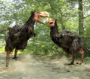 Gastornis Fighting (Terror Birds). An illustration of two male Gastornis fighting over a nested territory.  Gastornis are an extinct genus of large flightless Stock Image