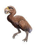 Gastornis Stock Images