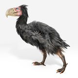 Gastornis (Terror Birds). An illustration of Gastornis, an extinct genus of large flightless birds that lived during the late Paleocene and Eocene epochs of the Stock Photography