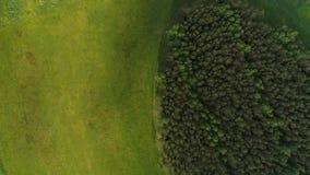 Gastos indirectos lentos móviles del abejón sobre campos y madera de pino almacen de metraje de vídeo