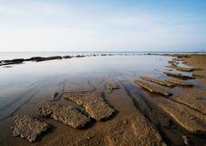 Gastrópode Shell Beach fóssil, anos de 75 milhões velhos Fotos de Stock Royalty Free