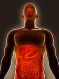 Gastroenteritis Foto de archivo libre de regalías
