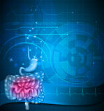 Gastrointestinal tract vector illustration