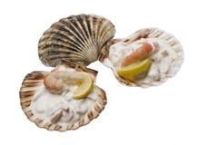 Gastronomische grote garnalensalade in shell Stock Foto