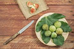 Gastronomisk sammansättning med fikonträd royaltyfri fotografi