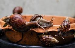gastropod стоковое изображение