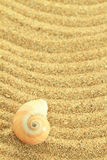 Gastropod shell. On the sand royalty free stock photography