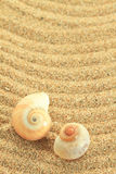 Gastropod shell Royalty Free Stock Image