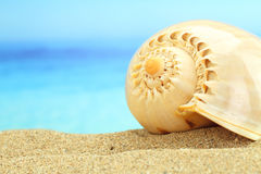 Gastropod shell Stock Photography