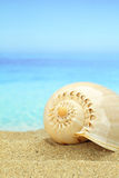 Gastropod shell. On the beach stock images