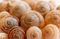 Spiral snail shells. Gastropod shells. Macro, closeup. The gastropod shell is part of the body of a gastropod or snail, a kind of mollusk or mollusc. The shell stock image