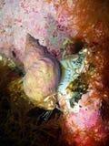 Gastropoda małż Obrazy Royalty Free