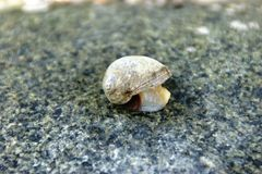Gastropoda, Mollusca Stock Photos