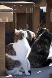 Gaststättekatzen in Italien Stockfotos
