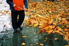 gata för 2 rengöringsmedel Royaltyfria Foton
