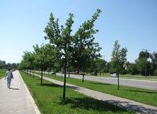 Gata i Novi Sad Arkivbilder
