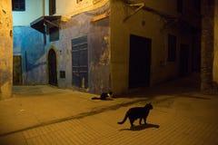 Gata Kitty Cat på gatorna av Essaouira i Marocko i den fiska porten och medina nära den kulöra väggen livsstil arkivfoton